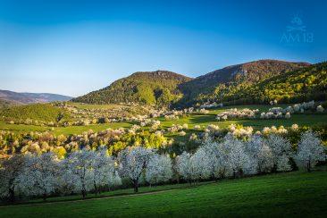Brdárka s čerešňami a vrch Radzim