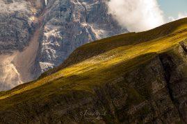 Ovečky na stráni v Talianskych Dolomitoch. V pozadí Monte Pelmo.