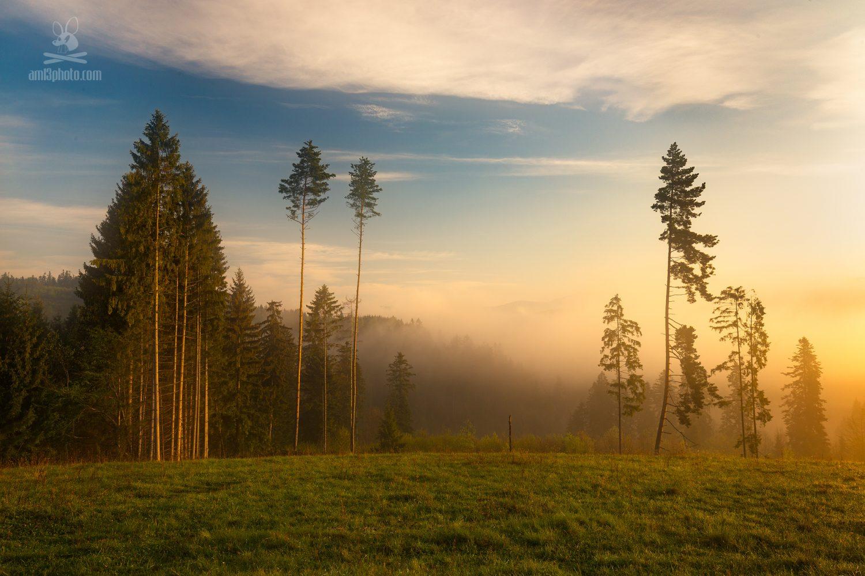 severne podpolanie stromy