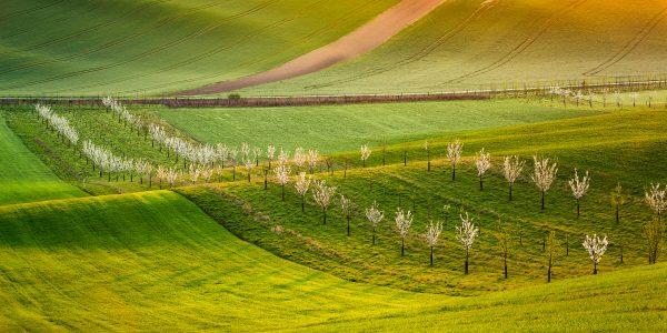 Moravské Toskánsko | Moravian Tuscany